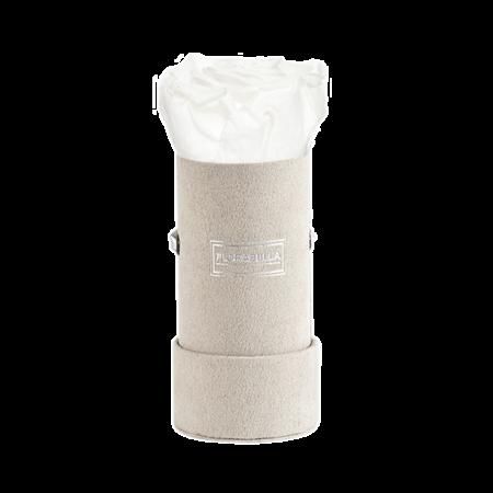 xs-greyvelvet-pure-white-lily