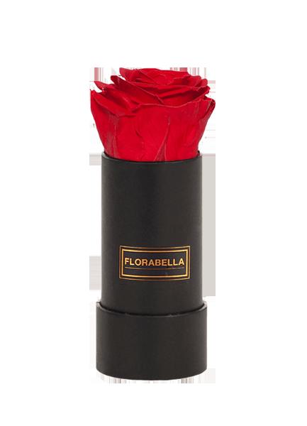 xs-schwarz-rosegold-royal-red